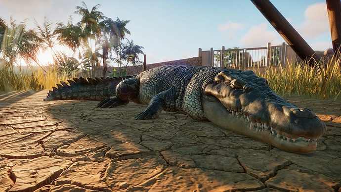 PZ_Saltwater%20Crocodile_1_1920x1080