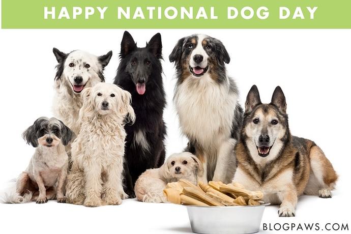 National-Dog-Day_Hero