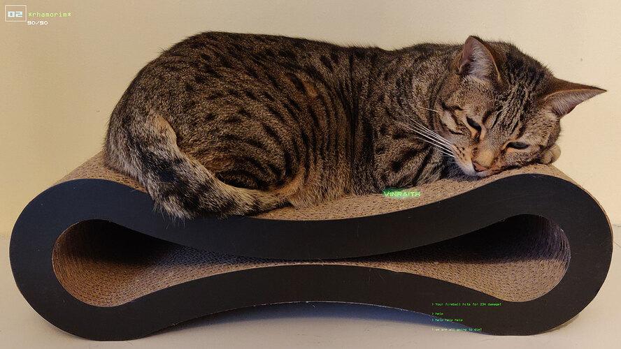 lazy-cat-2