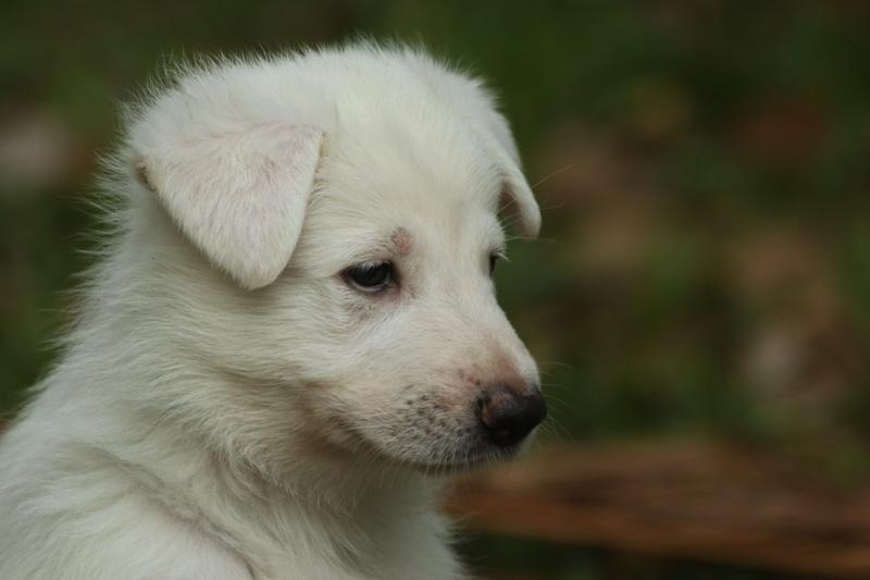 Pups-8281